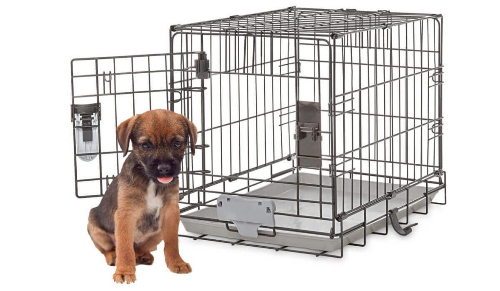 kennel-training-a-puppy